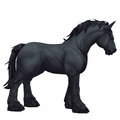 Unsaddled Black Horse